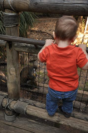 Jackson checking out the monkeys