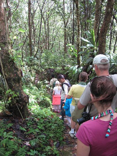 Enbas Saut Rainforest Hike