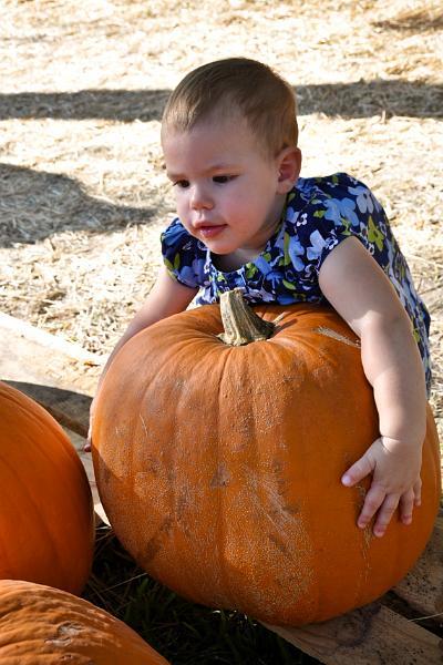 Audrey's pumpkin
